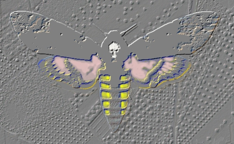 digital fine art of the Death's head hawk moth by the artist Gregory,here Gregory is comparing digital images with his paintings titled death head over orange,